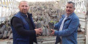 Çınar'da çiftçilere fıstık fidesi dağıtıldı VİDEO-FOTO