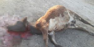 Ani hayvan ölümleri köylüleri endişelendiriyor