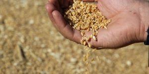 Şanlıurfa'da buğday 0,70- 1,10 liradan satıldı