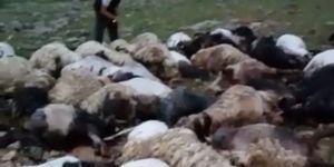 Yıldırımın isabet ettiği 70 koyun telef oldu