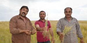 Çiftçiler yaşadıkları kuraklık nedeniyle destek bekliyor