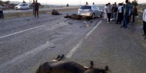 Bismil-Diyarbakır Karayolunda otomobil sürüye daldı: Çoban kız öldü, 2 yaralı