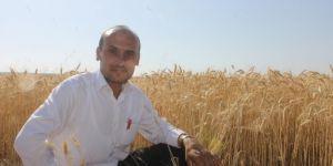 Buğday eken çiftçiler bu sene zarar etti