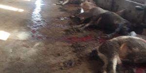 Mardin Derik 'te elektrik akımına kapılan 9 hayvan telef oldu