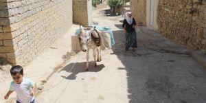 Diyarbakır Hazro'da 21'inci yüzyılda su ihtiyaçlarını eşeklerle karşılıyorlar