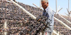 Gaziantep Oğuzeli'de 40 derece sıcaklıkta kurutmalık sebze mesaisi