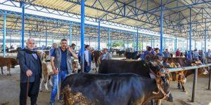 Şanlıurfa Siverek'te hayvan besicileri sorunlarına çare arıyor