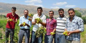 Ekinlerini dolu vuran köylüler yardım bekliyor