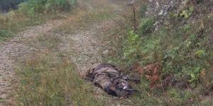 Gümüşhane Kürtün'de biri kırmızı listeden 2 PKK'li öldürüldü