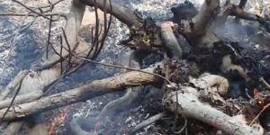 Elâzığ Alacakaya'da yılanı diri diri yaktılar
