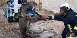 Şanlıurfa Harran'da çukura düşen eşek kurtarıldı