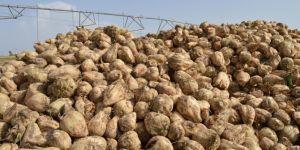 Çiftçiler şeker pancarı taban fiyatlarından memnun değil