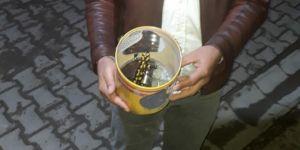 Elazığ'da nesli tükenmekte olan semender bulundu