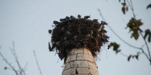 Minare güvercinlere yuva oldu