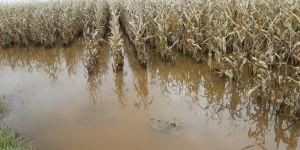 Mısır tarlaları sular altında kalan çiftçi destek bekliyor