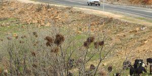 Yaprak döken ağaçlar yüzlerce kuş yuvasını gün yüzüne çıkardı