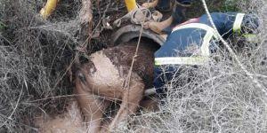 Şanlıurfa Harran ve Ceylanpınar'da menfeze sıkışan atlar kurtarıldı