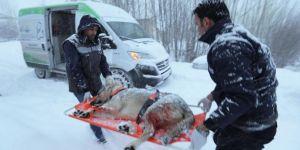 Van'da av tüfeğiyle vurulan köpek 3 saatte kurtarıldı