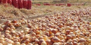Turkiye not to impose tariffs on onion