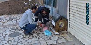 Diyarbakır Büyükşehir Belediyesi sokak hayvanlarına sahip çıkıyor