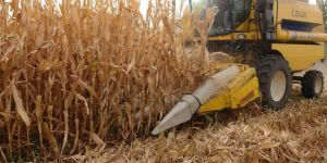 Diyarbakır'da çiftçilere destekleme ödemesi yapılacak