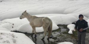 Kozluk'ta karda mahsur kalan at kurtarıldı