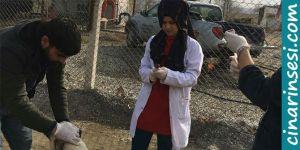 Bismil Belediyesinden sokak hayvanları için sıcak yuva