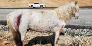 Hasankeyf'te atların ateşli silahla vurulması tepkiye neden oldu