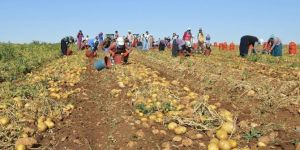 No customs duty on import of potatoes in Turkiye