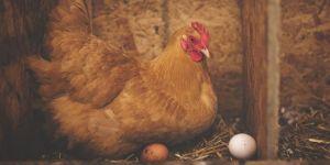 Kümes hayvancılığı üretimi açıklandı