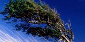 Doğu ve Güneydoğu Anadolu'da kuvvetli rüzgâr etkili oluyor
