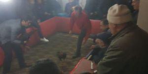 Van'da horoz dövüştüren 49 kişiye 15 bin 680 TL para cezası
