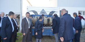 Genç Çiftçiler'e küçükbaş hayvan ve fıstık fidanı dağıtıldı