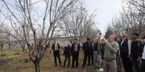 Dicle'de meyve ağaçlarında budama uygulamalı olarak gösterildi