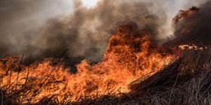 İznik Gölü kıyısındaki sazlık alanda yangın çıktı