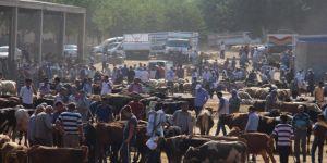 Canlı hayvan ve hayvansal ürün fiyatları arttı