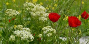 Gercüş flora ile süslendi