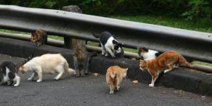 Avustralya iki milyon kedi öldürecek