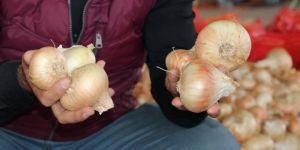 Çukurova bölgesinde hasadın başlamasıyla soğan fiyatları düşmeye başladı