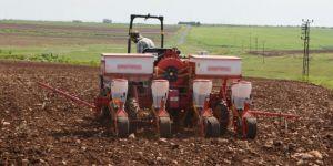 Hilvan'da pamuk ekimine başlayan çiftçiler dertli