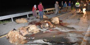 Muş'ta otomobil sürüye daldı: 19 koyun telef oldu
