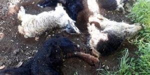 Genç'te hayvan ölümleri köylüleri korkutuyor