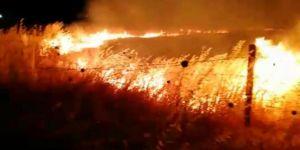Suriye sınırında çıkan yangın büyüyerek devam ediyor