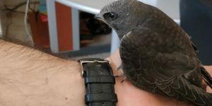 Siverek Vakıf Ortaokulu içerisinde ebabil kuşu bulundu