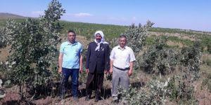 Karacadağ'da ekilen fidanlar yeşerdi