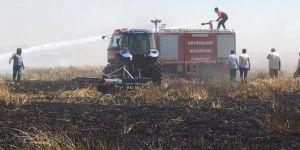 Derik'te 70 dönümlük buğday tarlası yandı