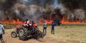Derik'te 500 dönüm buğday kül oldu