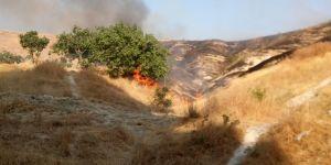 Birecik'te fıstık ağaçları yandı