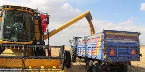 1,5 milyon ton buğday hasadı gerçekleştirmeyi hedefliyoruz