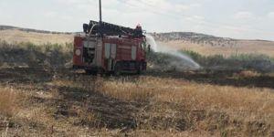 Derik'te 80 dönümlük buğday ekini kül oldu